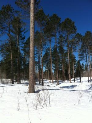 Red Pines, Eagle Ridge Loop