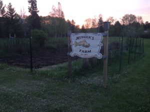 The vegetable garden.